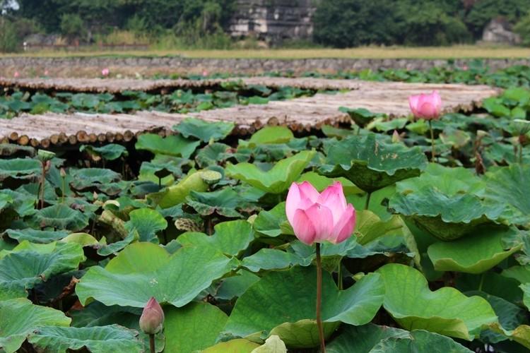 色彩豊かなベトナム旅②【絵画のようなニンビンの絶景】_2