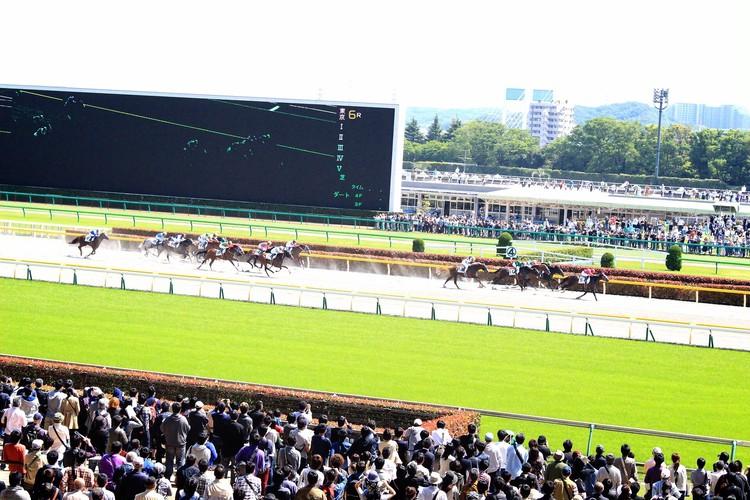 【週末お出かけ】有馬記念まであと6日!アナタもUMAJOデビュー<前編>_1