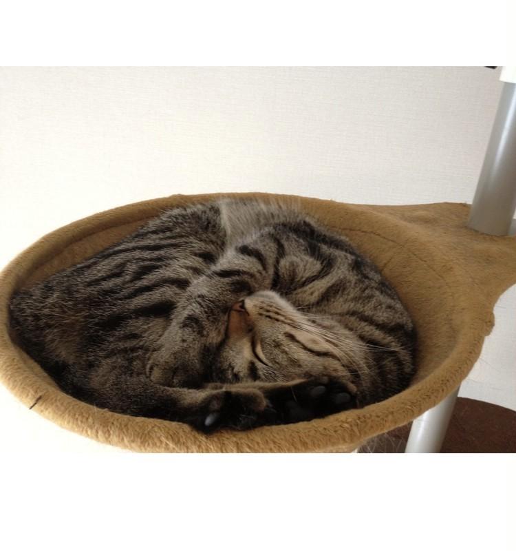 【エディターのおうち私物#29】いるだけでパワースポット! 我が家のモフモフ猫_2