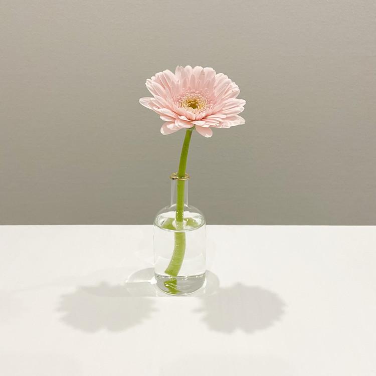 【お花のサブスク】結局どこがときめく?お花のある暮らしで分かったこと【おうち時間】 _1