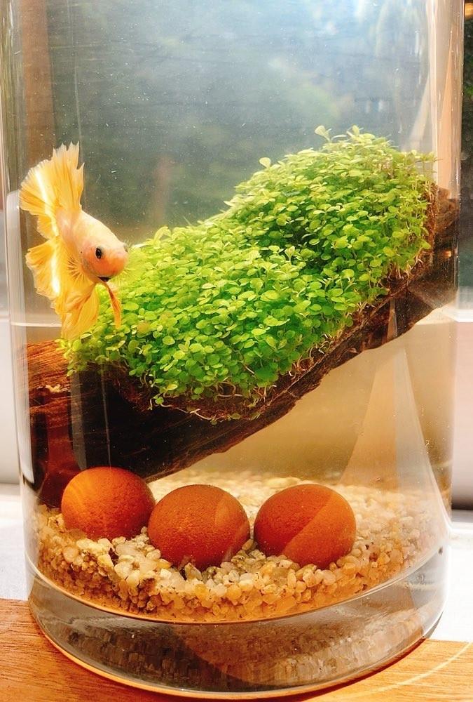 アクアリウム生活!熱帯魚飼い始めました。_1