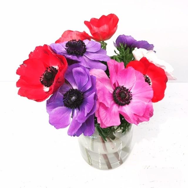 ファッション業界でいま大人気!【ディリジェンスパーラー】の花に注目!_1