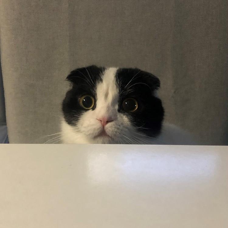 ヘアメイクANNA.さんの愛猫