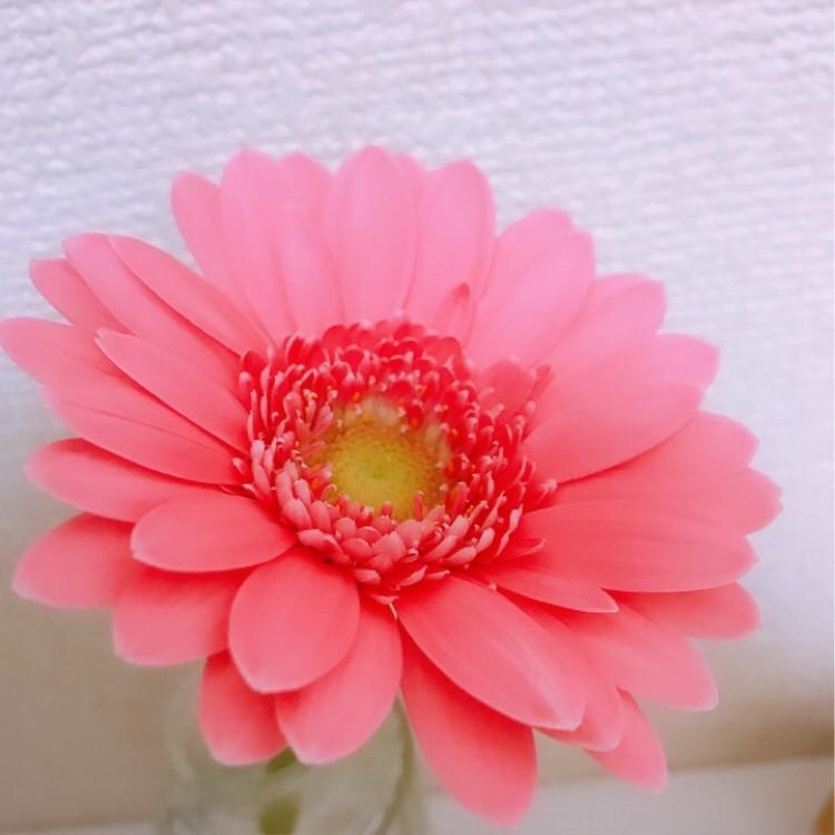 お家時間の癒し。花のある暮らしを楽しんでます_5