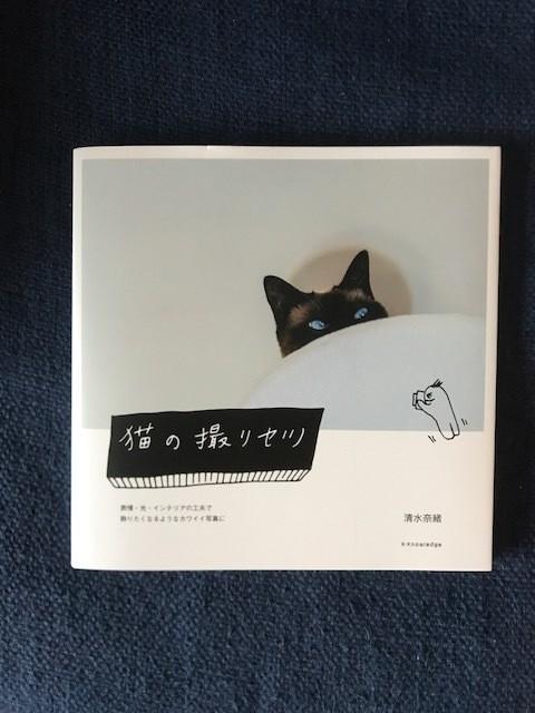 猫好きカメラマンによる、愛溢れる「猫写真の撮り方」に癒される♡_1