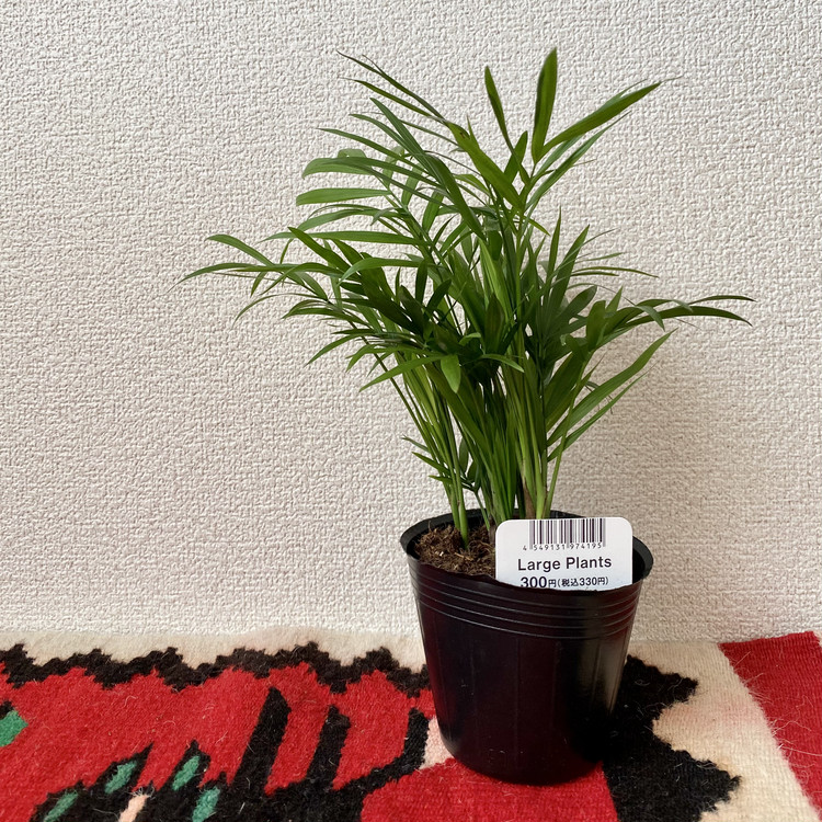 ダイソー DAISO 100均 100円ショップ 高価格帯 新ブランド スタンダードプロダクツ Standard Products おすすめ 観葉植物 テーブルヤシ