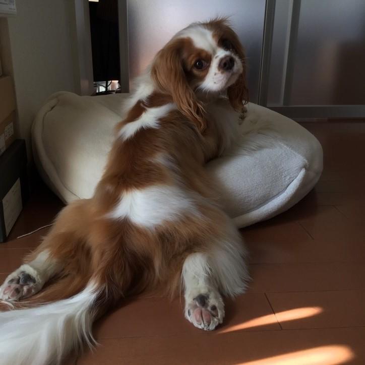 ライター榎本洋子さんの愛犬