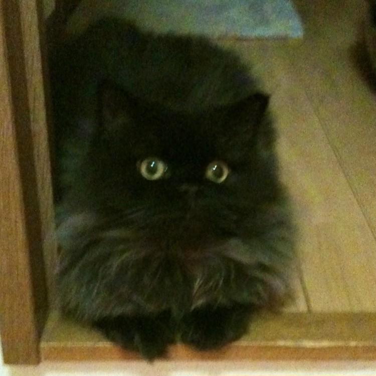 スタイリスト小川ゆう子さんの愛猫 幼少期