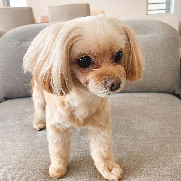 桐谷美玲さんの愛犬