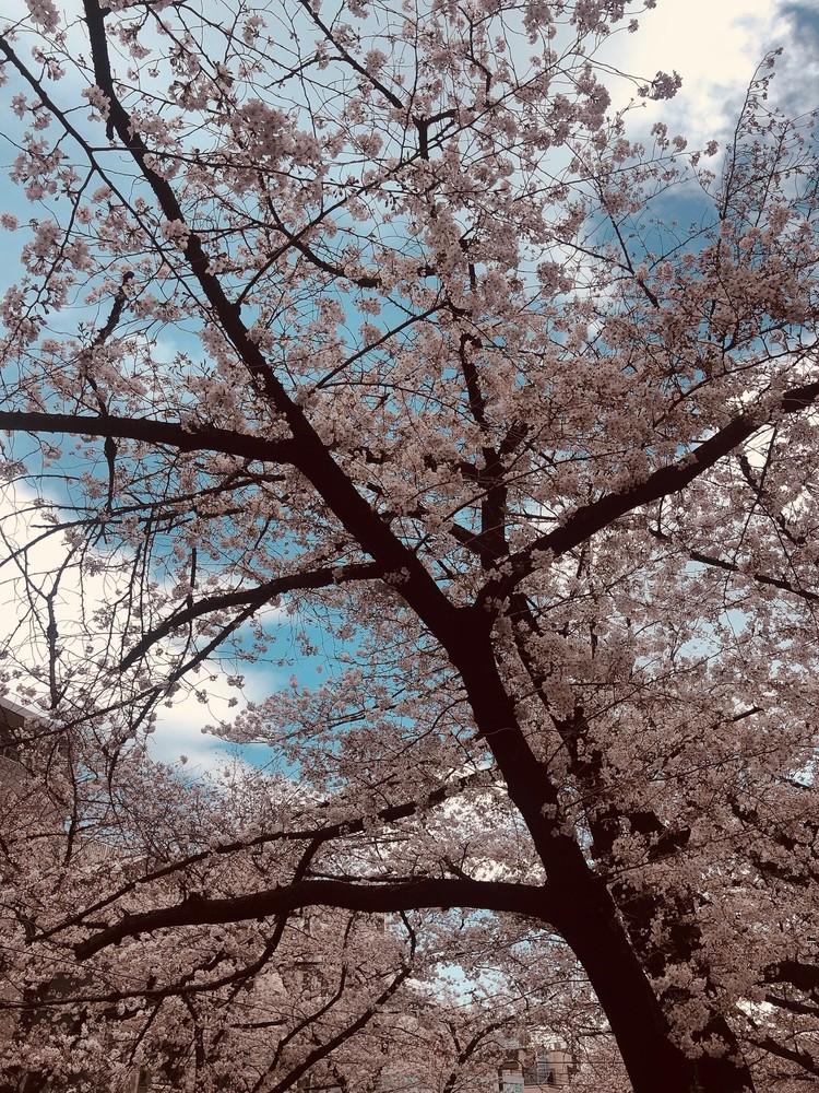 サブカル女子のための春の夜ゆるふわエレクトロなプレイリスト_7