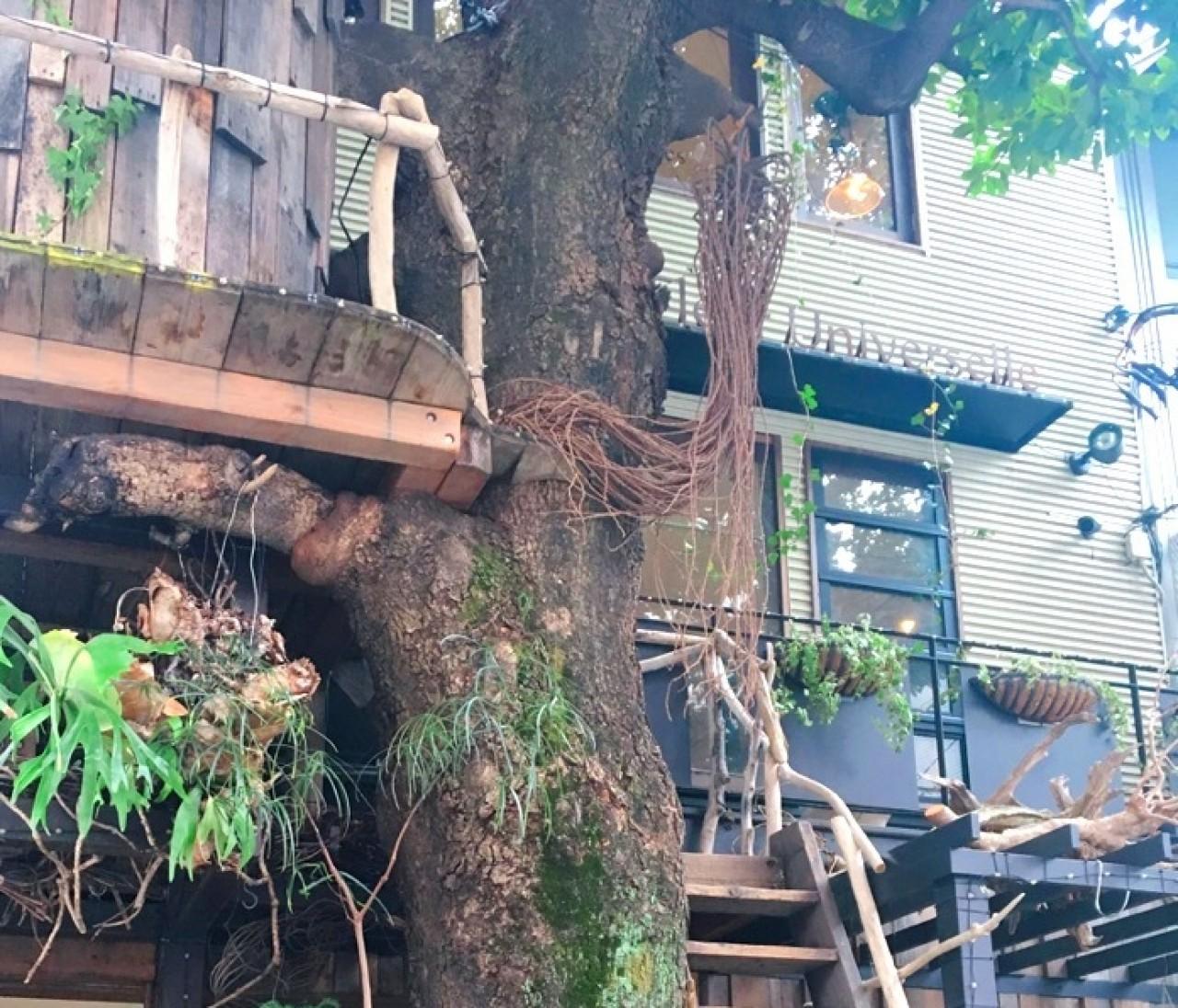 ツリーハウスのボタニカルカフェ♡