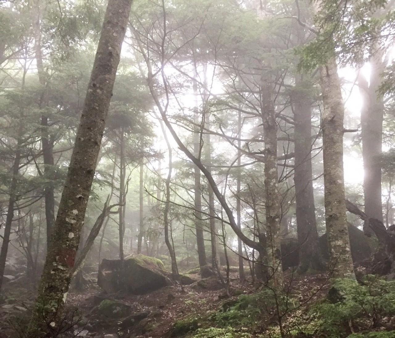 夏休み。八ヶ岳のひとつ、編笠山を登る