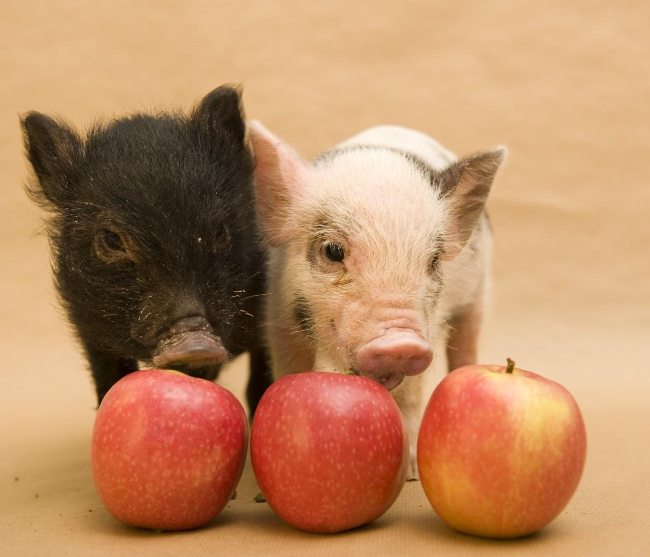 3月1日は豚の日!? セレブの豚さん&セレブな豚さんをご紹介