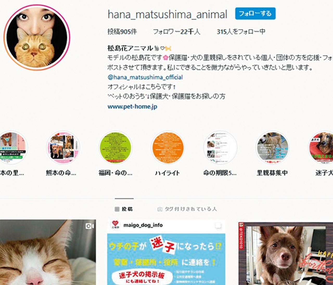 モデル・松島花が行う「SNSを使って動物の命を救う保護活動支援」
