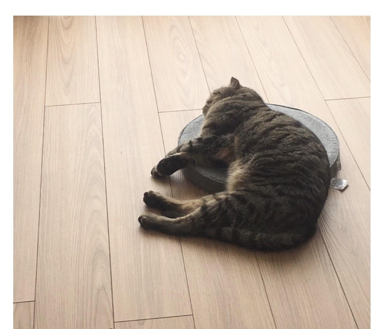 【エディターのおうち私物#68】癒される!「気持ちよさそうな熟睡猫」