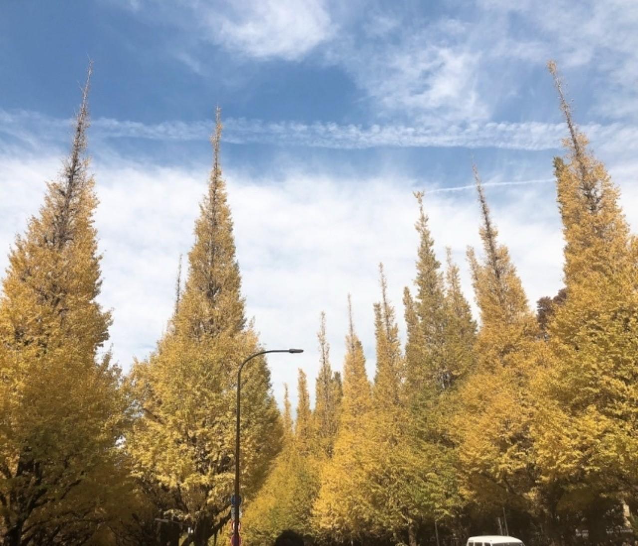 【今が見頃!】神宮外苑いちょう祭りといちょう色ネイル