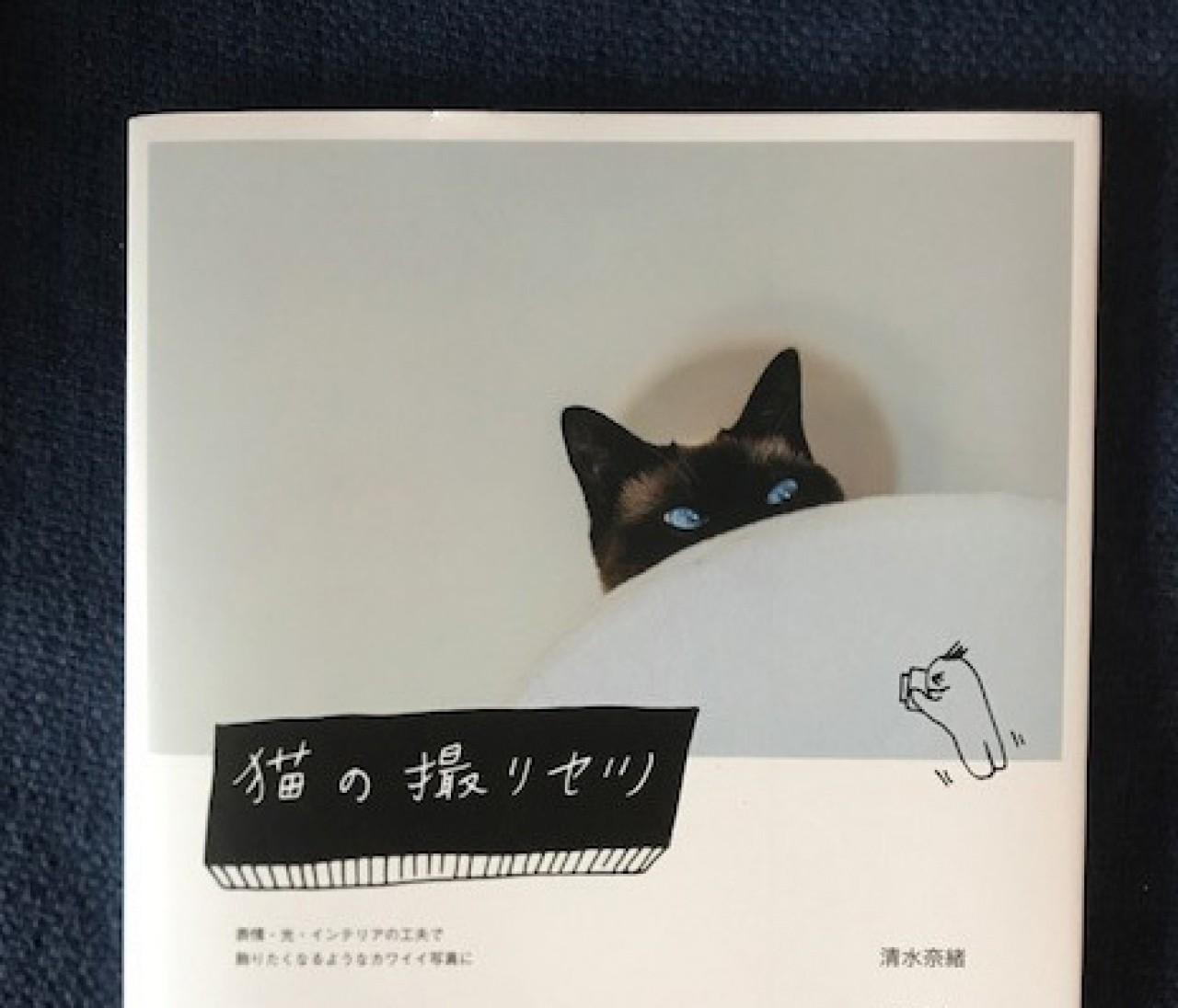 猫好きカメラマンによる、愛溢れる「猫写真の撮り方」に癒される♡