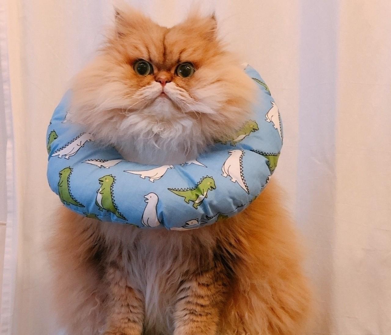 【集まれ、にゃんばか部♡】松島花、宮田聡子の愛猫も!かわいい猫たちの癒し画像集