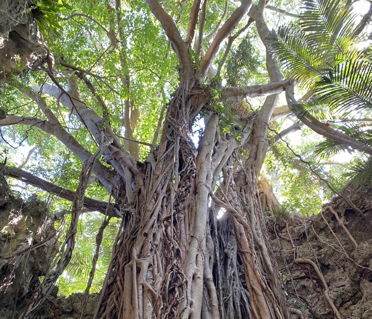 【沖縄旅行記②】唯一の観光は、ガンガラーの谷へ。