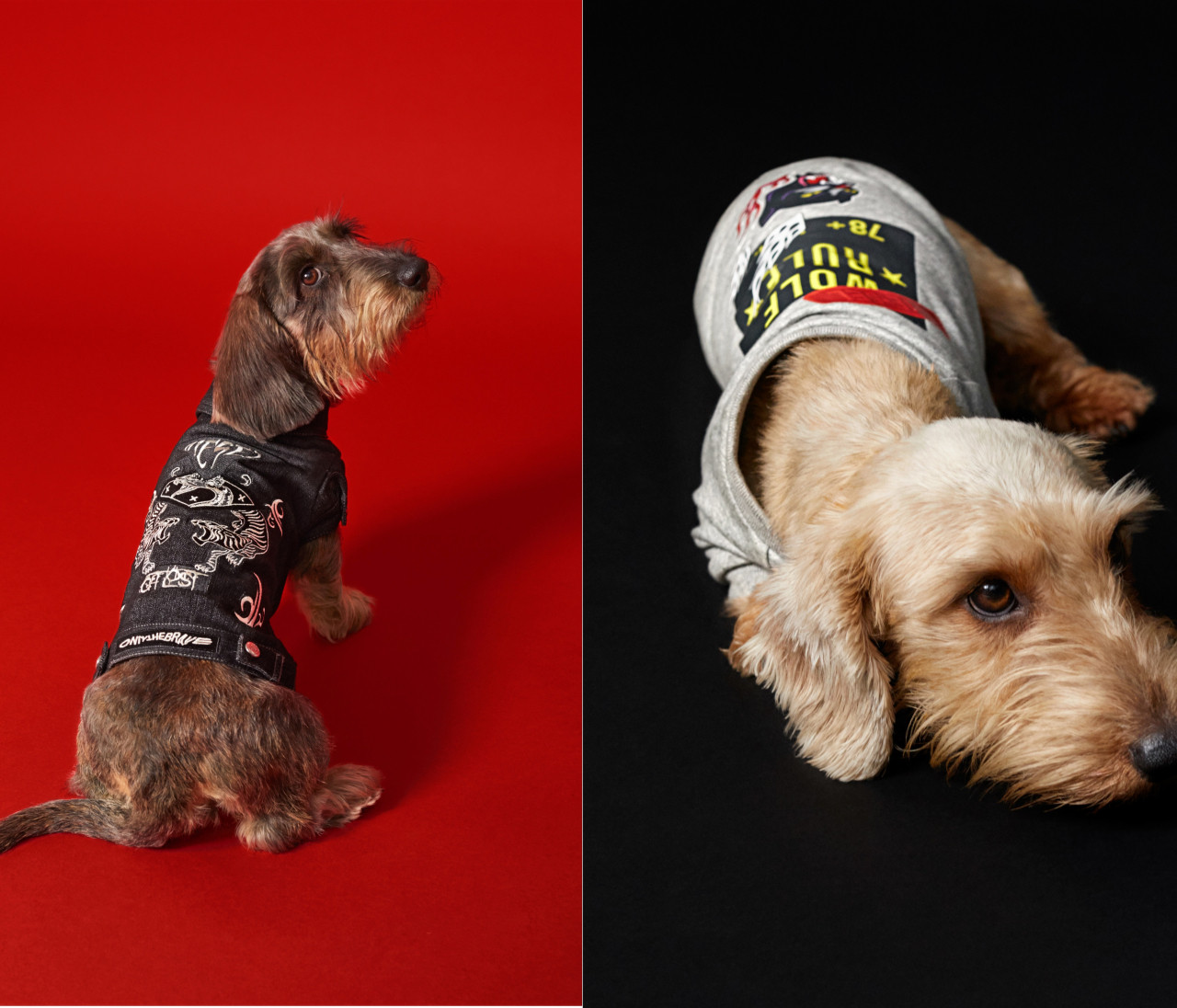 【DIESELから初のドッグウェアコレクションが登場】クールなエッセンスを愛犬にも♡