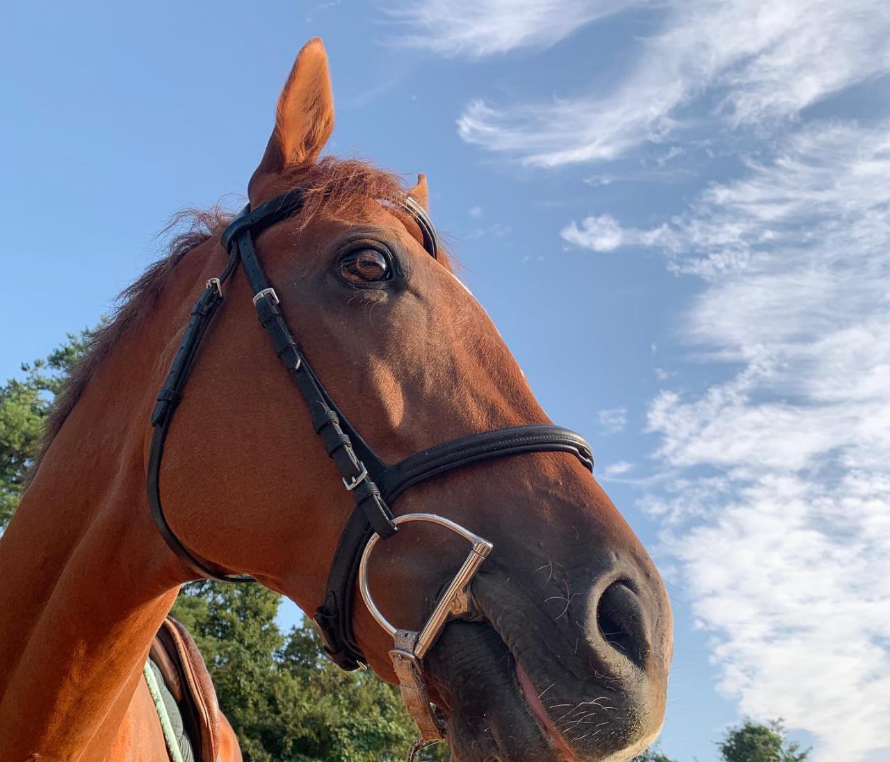 引退競走馬の余生に携わるという幸せについて【30代に幸せをくれるものvol.28】